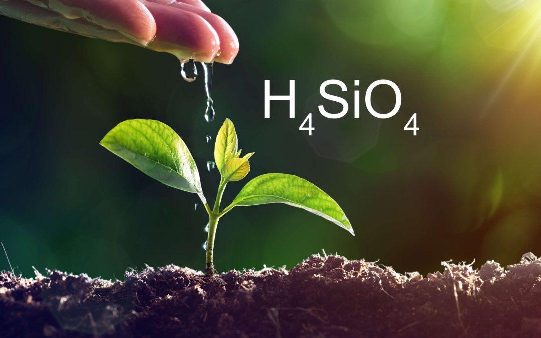 H4SiO4